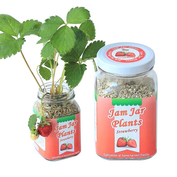 《APP》【Light+Bio】Jam Jar Plants小植栽-迷你草莓