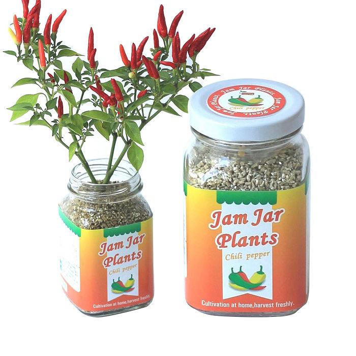 《APP》【Light+Bio】Jam Jar Plants小植栽-五彩辣椒
