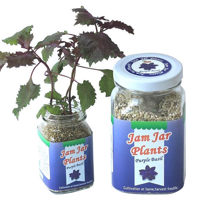 《APP》【Light+Bio】Jam Jar Plants小植栽-紫蘇
