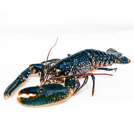 【寶島福利站】法國布列塔尼藍龍蝦(700g+-10%/尾)