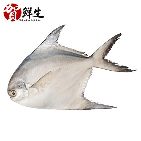 【賀鮮生】野生鮮嫩白鯧魚6尾(360g/尾)-戶外.婦幼.食品保健-myfone購物
