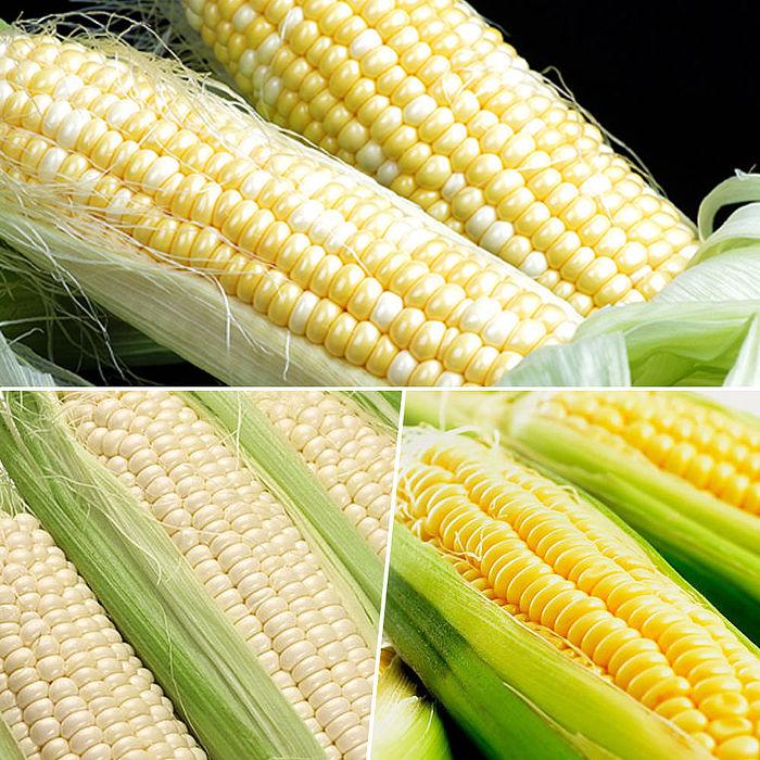 鮮採家 玉米家族綜合蔬果黃玉米+水果玉米+糯米玉米