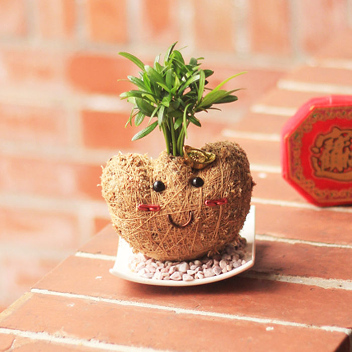 《童趣植栽》【Light+Bio】金元寶寶苔球
