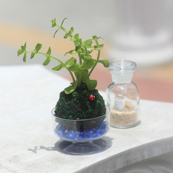 【Light+Bio】水生植物綠苔球-海洋星-戶外.婦幼.食品保健-myfone購物