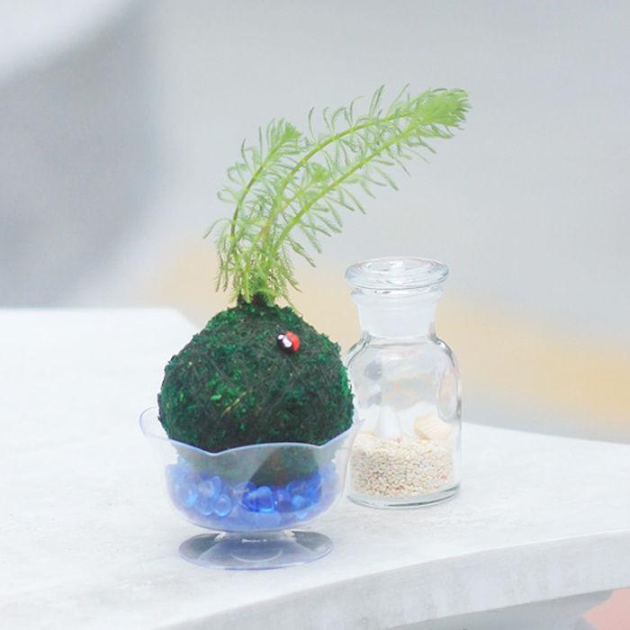 【Light+Bio】水生植物綠苔球-羽毛草-戶外.婦幼.食品保健-myfone購物