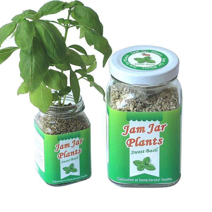 《APP》【Light+Bio】Jam Jar Plants小植栽-甜羅勒