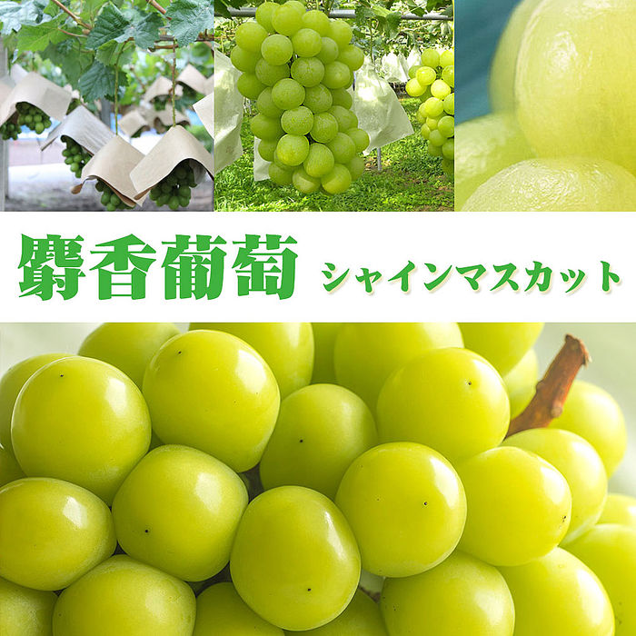 日本麝香綠無籽葡萄家用版1串入(570-620g)【甜露露鮮果宅配家】