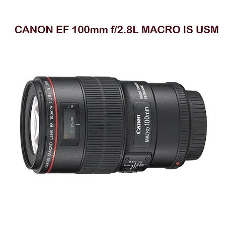 CANON EF 100mm F2.8 L Macro IS USM 微距鏡頭 (平輸)