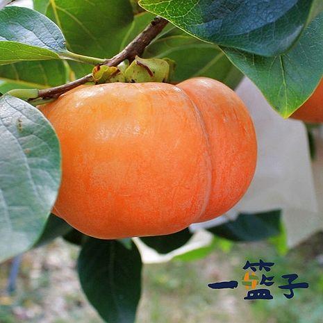 《一籃子》台中梨山在欉紅甜柿6A(共15顆/箱)-預購